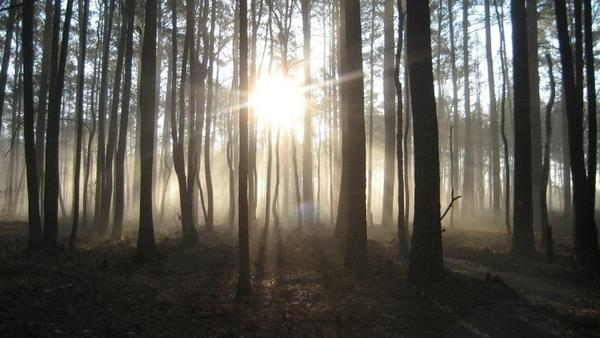 Great Dismal Swamp, in Virginia and North Carolina, was once thought to be haunted. For generations of escaped slaves, says archaeologist Dan Sayers, the swamp was a haven.