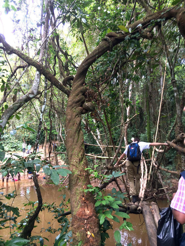 "The ""monkey bridge:"" Two bamboo poles is all you need to cross over a dark, muddy river."