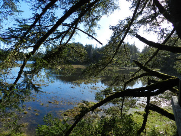 <p>Looking out on the South Slough of Coos Bay. </p>