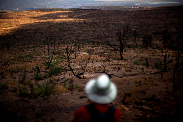 Allen surveys the moonscape of a plateau devastated by the Las Conchas fire.