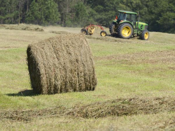 That's a valuable commodity: A hay bale at a farm in Eatonton, Ga., earlier this year.