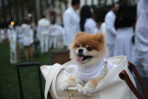 Even four-legged guests observed the chic, strictly white dress code at Wednesday's event.