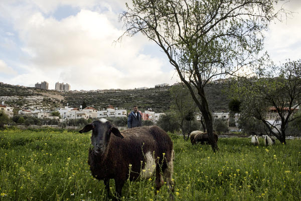 The Palestinian village of Marda in the West Bank mostly is made up of old stone houses. The Israeli settlement of Ariel is on the ridge line in the background.
