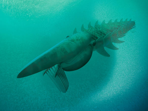 Reconstruction of the giant filter feeder, scooping up a plankton cloud. <em>Aegirocassis benmoulae </em>was one of the biggest arthropods that ever lived. Family members include today's insects, spiders and lobsters.