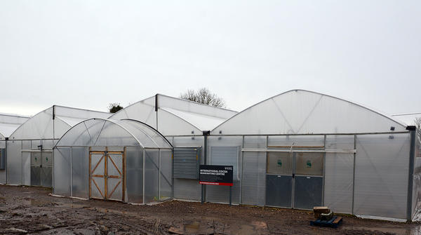 The International Cocoa Quarantine Greenhouse in Reading, about 40 miles west of London.