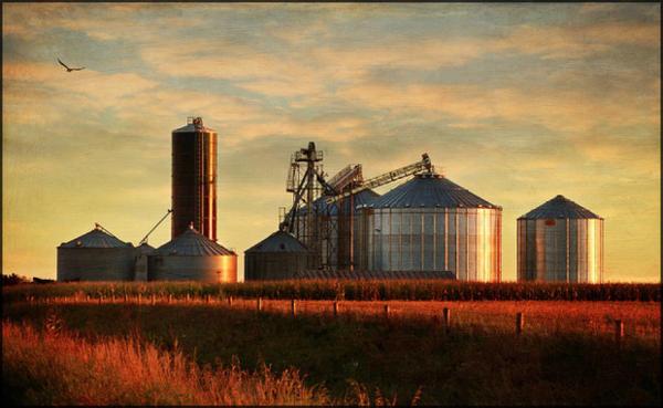 <p>A grain silo</p>
