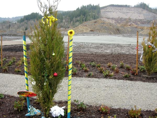 Forty-three trees now mark the area where the same number of people were killed by the mudslide.