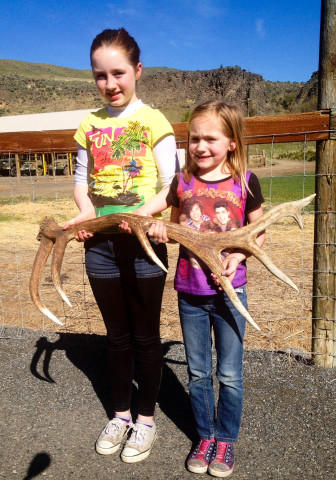 <p>Kyra and Bobbi Cline, 11 and 7, hold up an elk antler they found.</p>