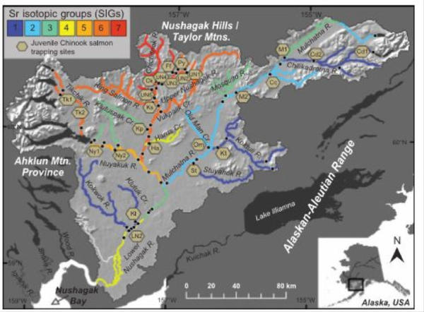<p>Sean Brennan mapped strontium isotope ratios in Alaska's Nushagak watershed. Then he broke them down into 7 different groups that shared the same ratios so that he could match them up with the ratios he found in the otoliths of adult salmon he caught at the mouth of the river.</p>