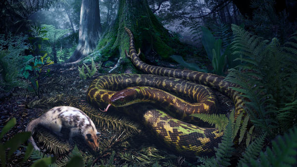 The most recent common ancestor of all today's snakes likely lived 120 million years ago. Scientists believe it used needle-like hooked teeth to grab rodent-like creatures that it then swallowed whole.