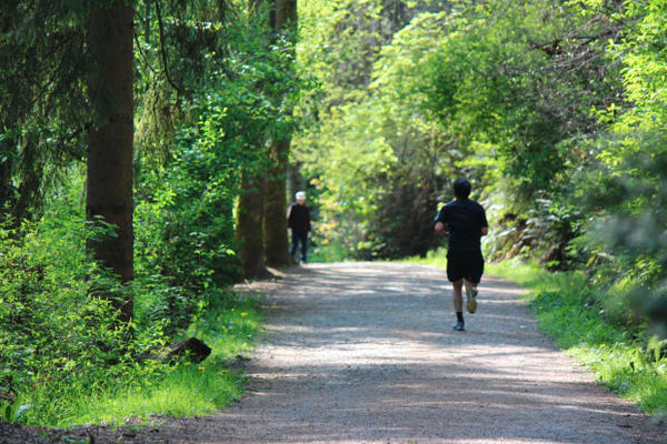 <p>A runner in Seattle's Ravenna Park.</p>