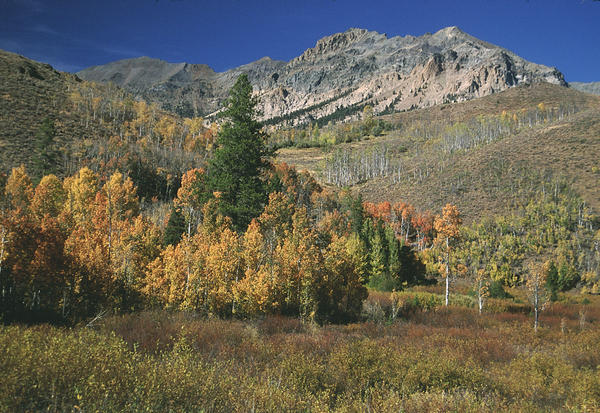 The Boulder Mountains in Idaho are part of The mountains and roadless area are part of the proposed 'White Cloud Wilderness Area.'
