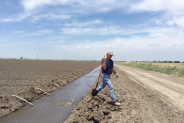 Rudy Mussi's family has farmed in the Sacramento Delta region for nearly a century. Mussi worries that more water transfers will deplete the fragile Delta ecosystem and wipe out family farms like his.