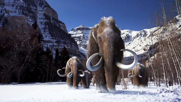 Mammoths had a distinctive version of a gene known to play a role in sensing outside temperature, moderating the biology of fat and regulating hair growth. That bit of DNA likely helped mammoths thrive in cold weather, scientists say.
