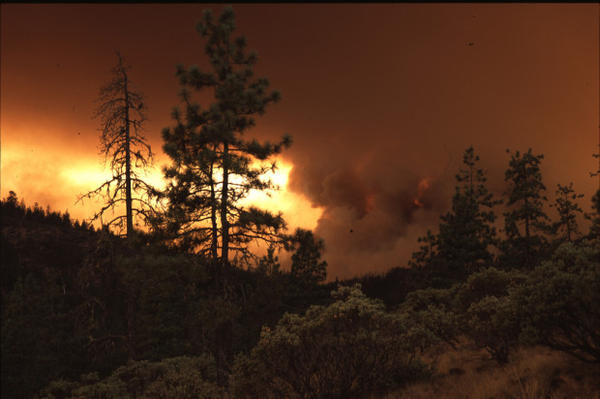 Fire scorched thousands of acres of Bureau of Land Management timber in 2013.