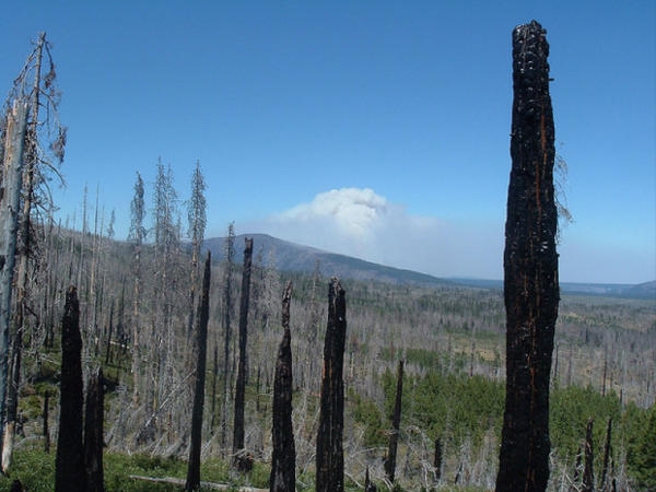 <p>Landscape of fire and insect affected forest near the Metolius River in Central Oregon.</p>