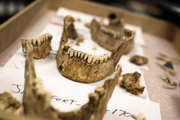 The teeth and mandibles of four male skeletons unearthed in Jamestown, Virginia, now reside in Washington, D.C., at the Smithsonian's museum of natural history. Researchers believe they've now puzzled out the identities of the men: high-status leaders from the first few years of the Jamestown settlement.