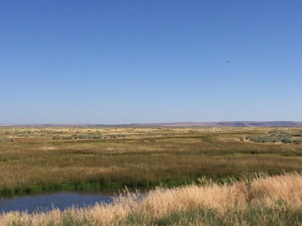 <p>Important summertime habitat for greater sage grouse at Roaring Springs Ranch.</p>