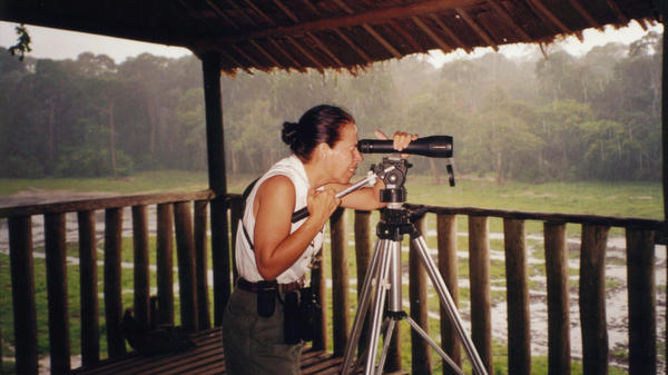 Andrea Turkalo looks through a scope in 2002 from the observation platform she built along the edge of the bai.