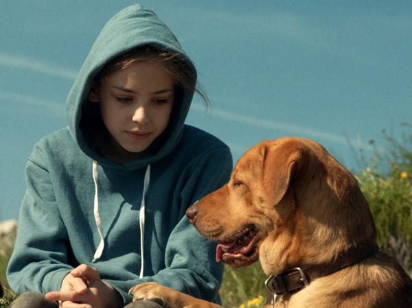 <em>White God</em> is about a dog who is separated from his owner (Zsófia Psotta) when her father forces her to give him up. Teresa Ann Miller worked as a trainer for the Hungarian film. <strong></strong>