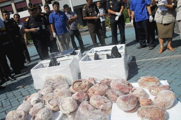 Last month, Indonesian customs officials seized more than a ton of frozen pangolins bound for Singapore. The animal is critically endangered, due to high levels of hunting and poaching for its meat and scales.