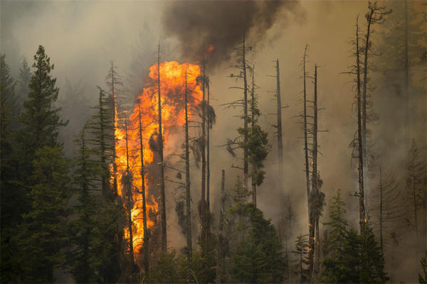 A view of the Wolverine Fire near Holden, Washington, on August 12, 2015.