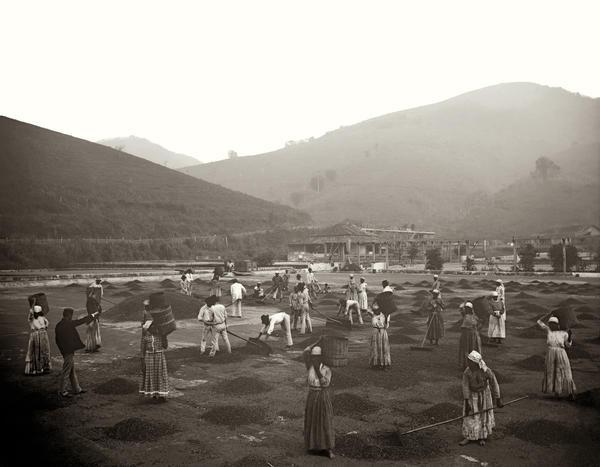 Slaves at a coffee yard in a farm. Vale do Paraiba, Sao Paulo, 1882.