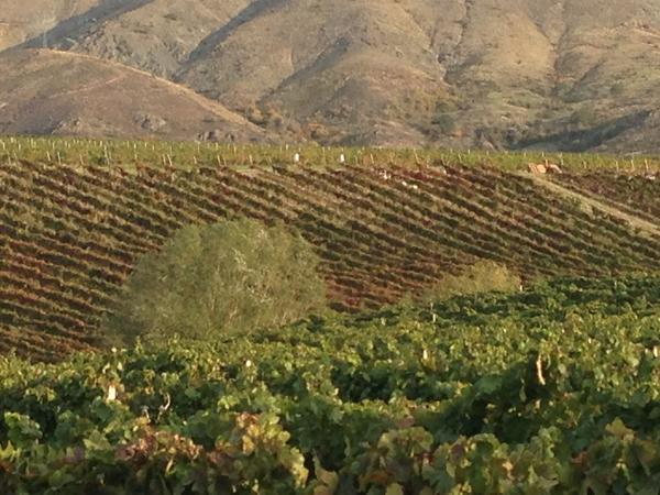"""One chapter in Cathy Huyghe's <em>Hungry for Wine </em>is devoted to the Vinkara vineyards in Turkey where """"hero wine"""" is produced."""