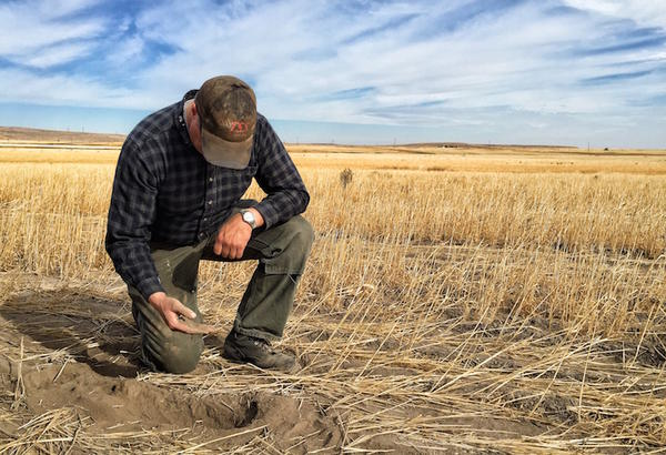 Wheat farmer Andy Juris says his fields have gone without rain since early June.