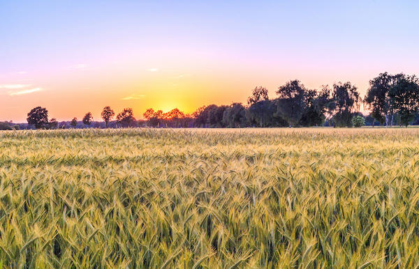How a plot of texas farmland keeps paying for college scholarships texas public radio - Profitable crops small plots ...