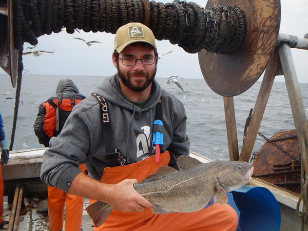 Zach Whitener, research associate at the Gulf of Maine Research Institute, holds a cod while collecting samples for a study.