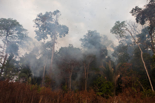 <p>As the convoy prepares to enter the forest, the burning trees make it too hot to continue. The Brazilian environmental authorities were established to stop this kind of burning, but they say they lack the resources to have a major impact.</p><p></p>