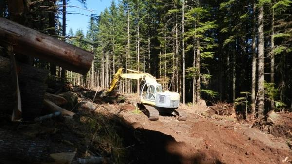 <p>A crew builds a new road on a Weyerhaeuser Tree Farm near Molalla. States set construction, maintenance, and placement standards for new logging roads, to control water pollution.</p>