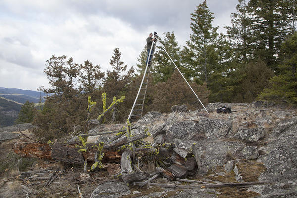 Photographer John Marshall on an orchard ladder re-photographing the view from the collapsed Juniper Point lookout.