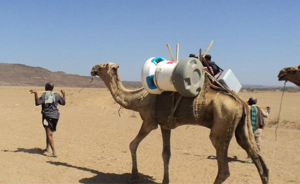 A camel gives a lift to the Arktek cooler, designed to give vaccines  the cold comfort they need to remain effective.