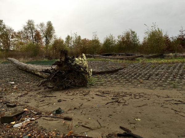 <p>Plastics and other trash litter on the east bank of the Willamette River on the cleaned up and capped McCormick and Baxter site.</p>