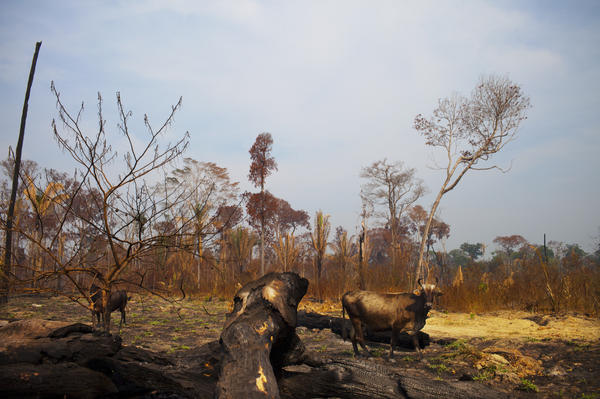 Deforestation in Rondonia has increased by 41 percent.