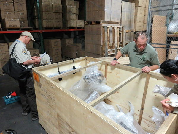 U.S. Fish and Wildlife Service Special Agent In Charge Eric Marek, center right, and Supervisory Wildlife Inspector John Goldman, left, examine a shipment of African hunting trophies at a customs bonded warehouse near Seattle-Tacoma International Airport.