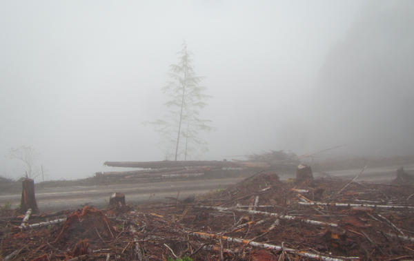 <p>This photograph was taken on the Ash Valley Overlook Unit, a recently logged portion of the Elliott State Forest sprayed by Applebee Aviation hours before the Oregon Department of Agriculture suspended the company's license. The license suspension came after a state investigation found violations of worker protection laws.</p>