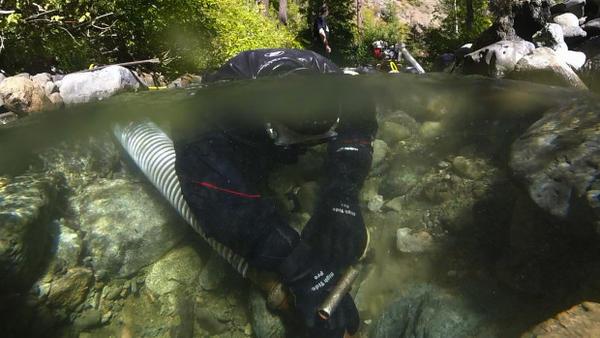 <p>Small scale gold miner Sean Wheeler operates a 4-inch hydraulic dredge in central Washington's Peshastin Creek.</p>