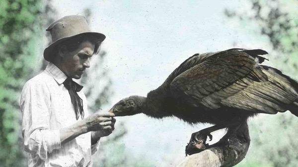 William Finley, seen here with a California condor, visited Malheur Lake in 1908 with his photography partner Herman Bohlman.