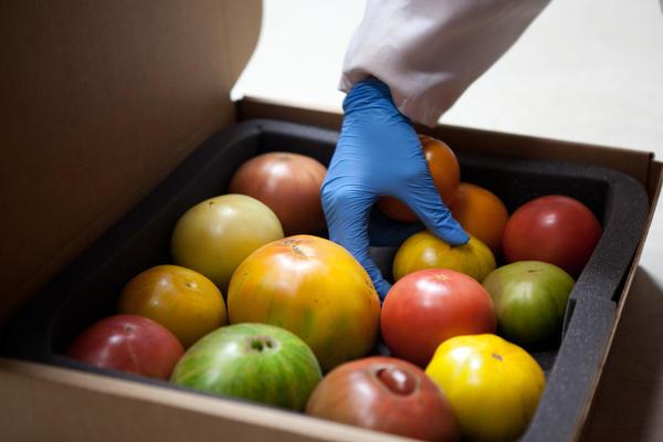 Packing tomato