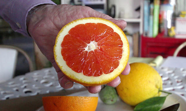 Russ Finch holds up half of a Cara Cara orange grown in his geothermal greenhouse in Alliance, Neb.