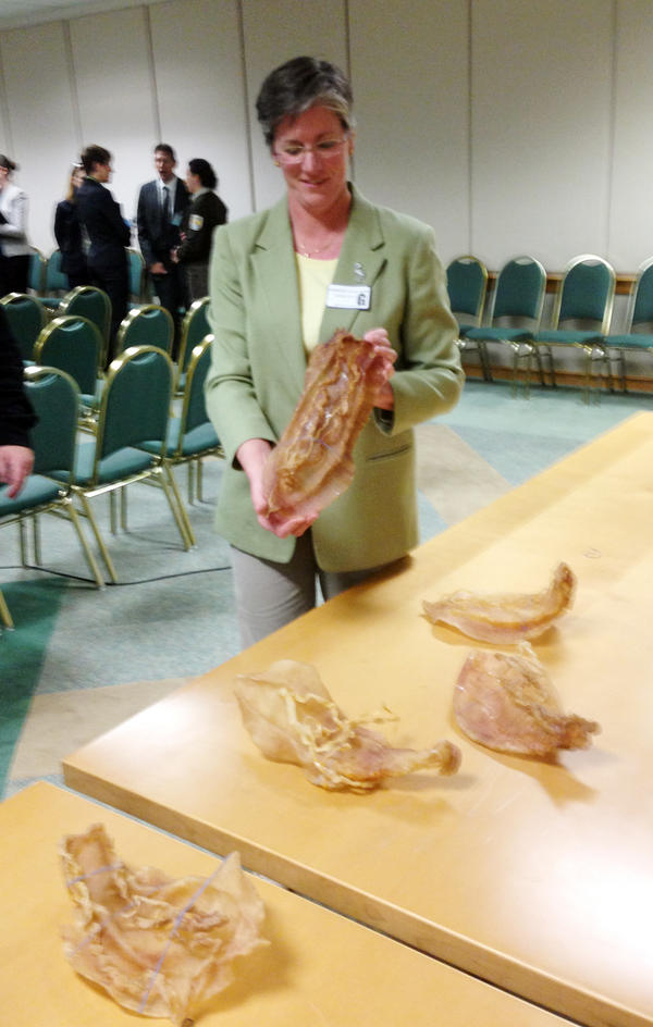 A scientist for the U.S. Fish and Wildlife Service shows a dried totoaba bladder at news conference in 2013.