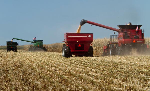 Combines harvest a corn field in Grand Island, Neb.