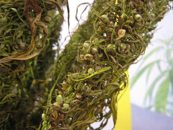 File photo of hemp seeds.