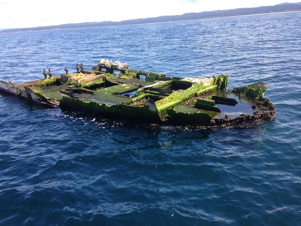 This is the Japanese boat wreckage that was recovered off of Newport, Oregon last April with a school of non-native fish inside its hull.