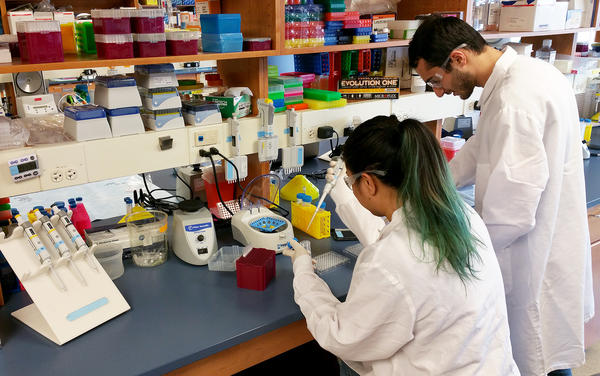 Mariel Mohns and Mustafa Rasheed are working in a University of Wisconsin lab that's trying to figure out how Zika virus could be damaging fetuses.