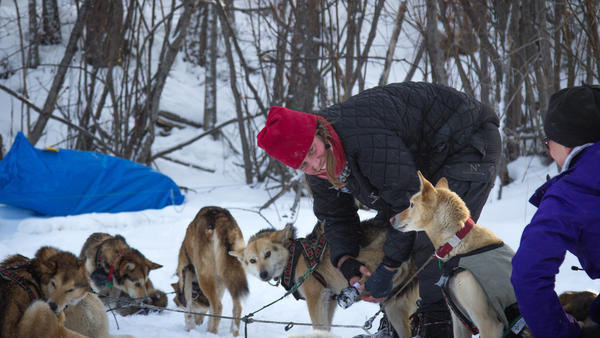 Aliy Zirkle handles her dogs during a rest in Galena along the Yukon River, her last stop before heading towards Nulato. Late in the night, as she approached Nulato, Zirkle was attacked by a snowmobiler a few miles outside the small community.
