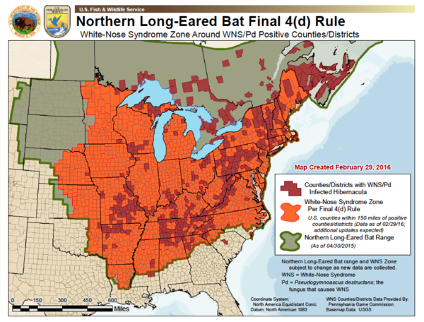 The 4(d) rule for the northern long-eared bat applies to all areas in orange. White-nose syndrome is affecting places where bats hibernate in the red zones. Green indicates the bat's habitat range.